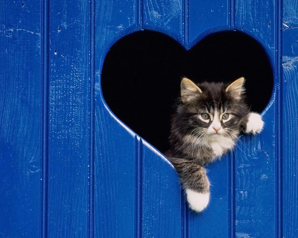 Heart 6 Ко дню Святого Валентина: Сердца, всюду сердца!