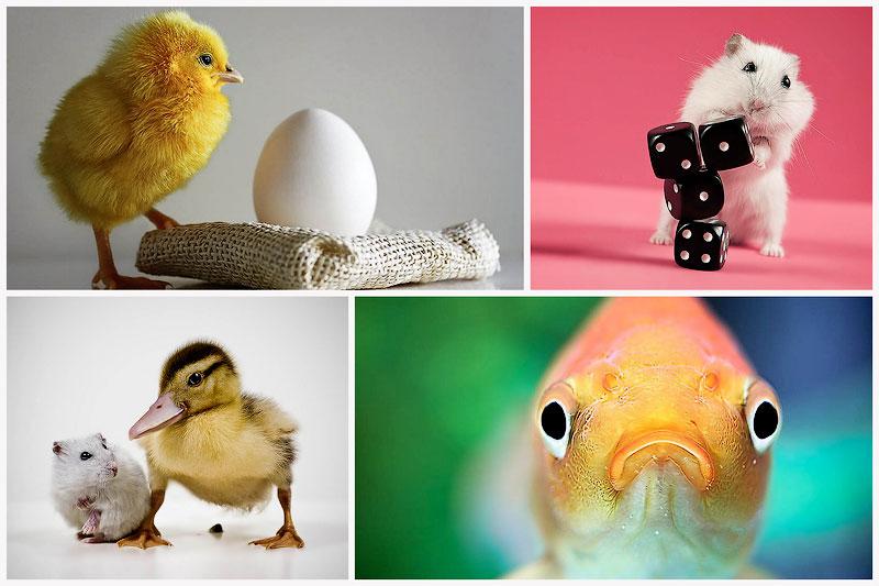 Забавные животные в объективе Эйбо