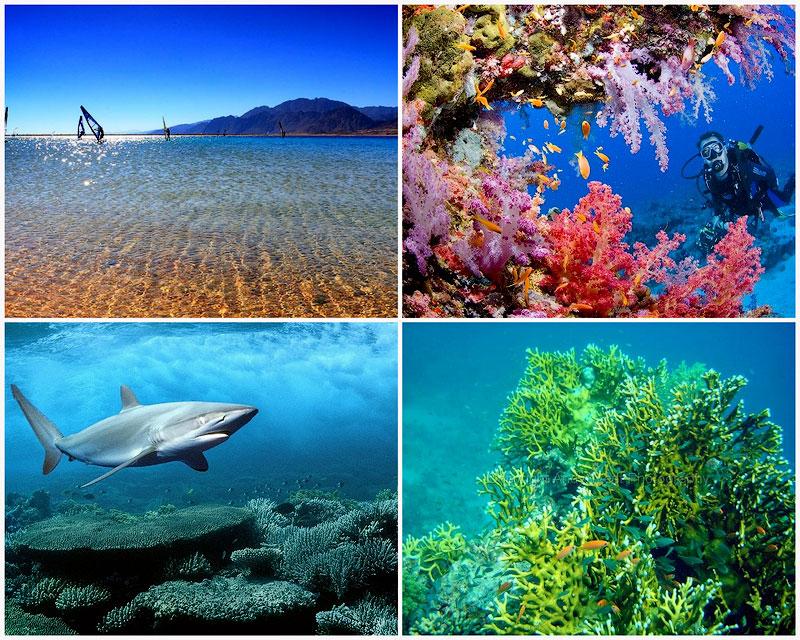TEMP107 10 фактов о Красном море