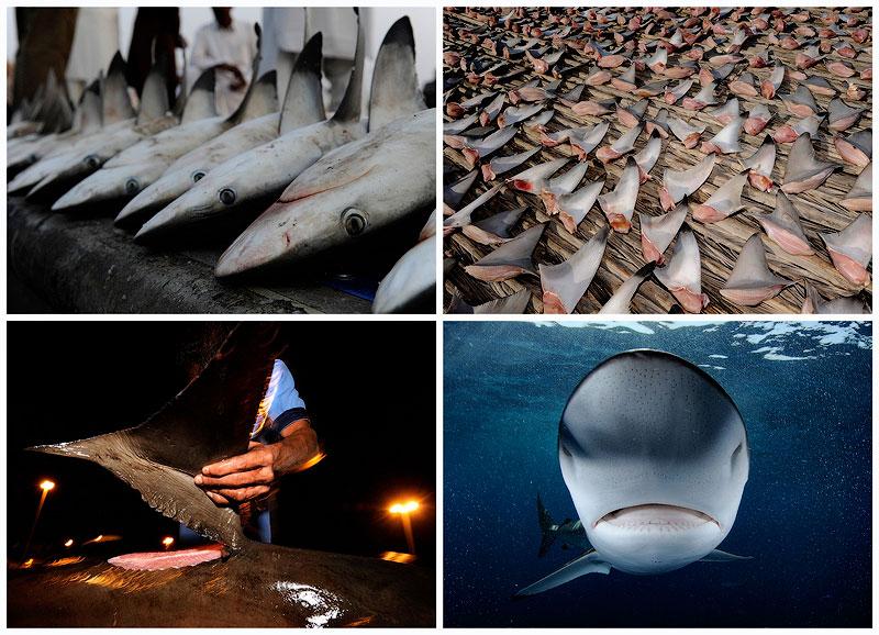 Акулий промысел в Аравийском море