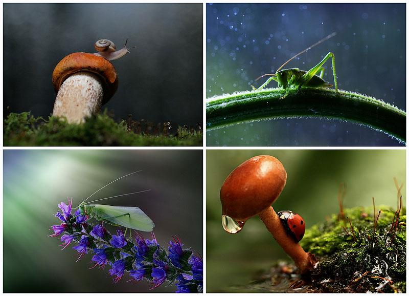 Улитки и насекомые в макрофотографиях Вадима Трунова