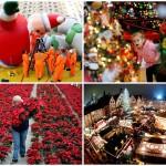 Предрождественские хлопоты в фотографиях