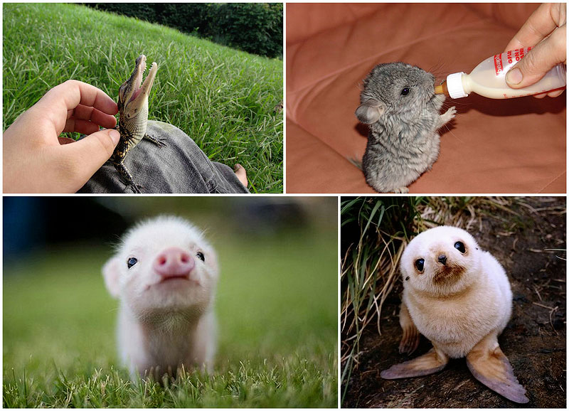 Детеныши животных в фотографиях
