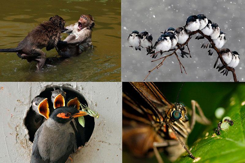 TEMP72 Лучшие фотографии природы 2012 года