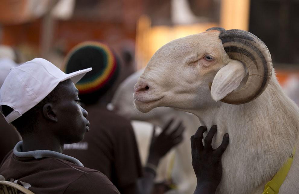 animalnews03 Животные в новостях