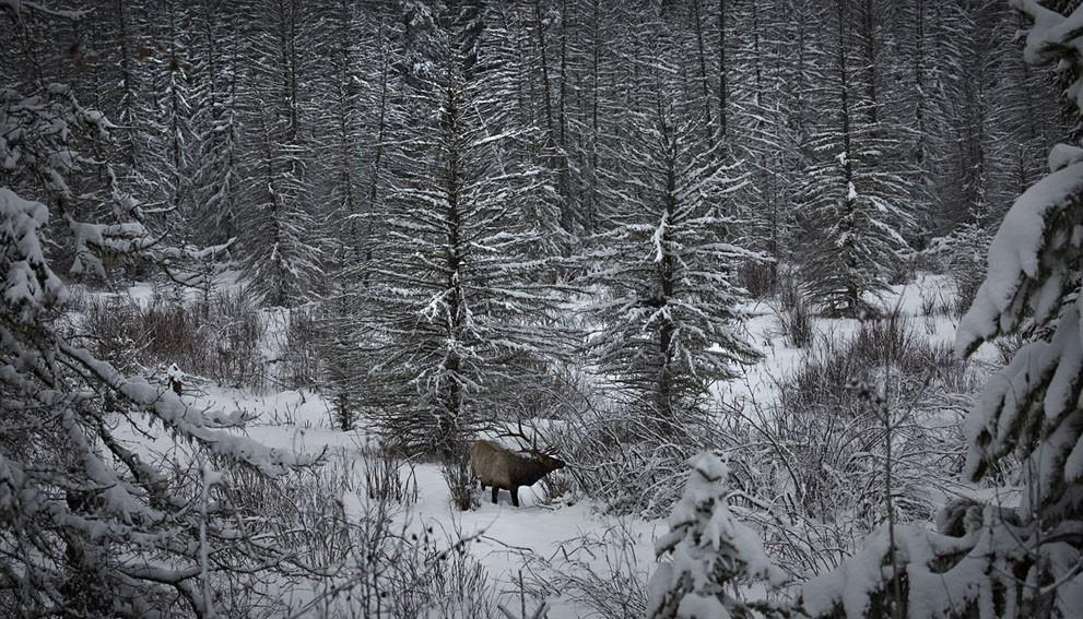 animalnews04 Животные в новостях