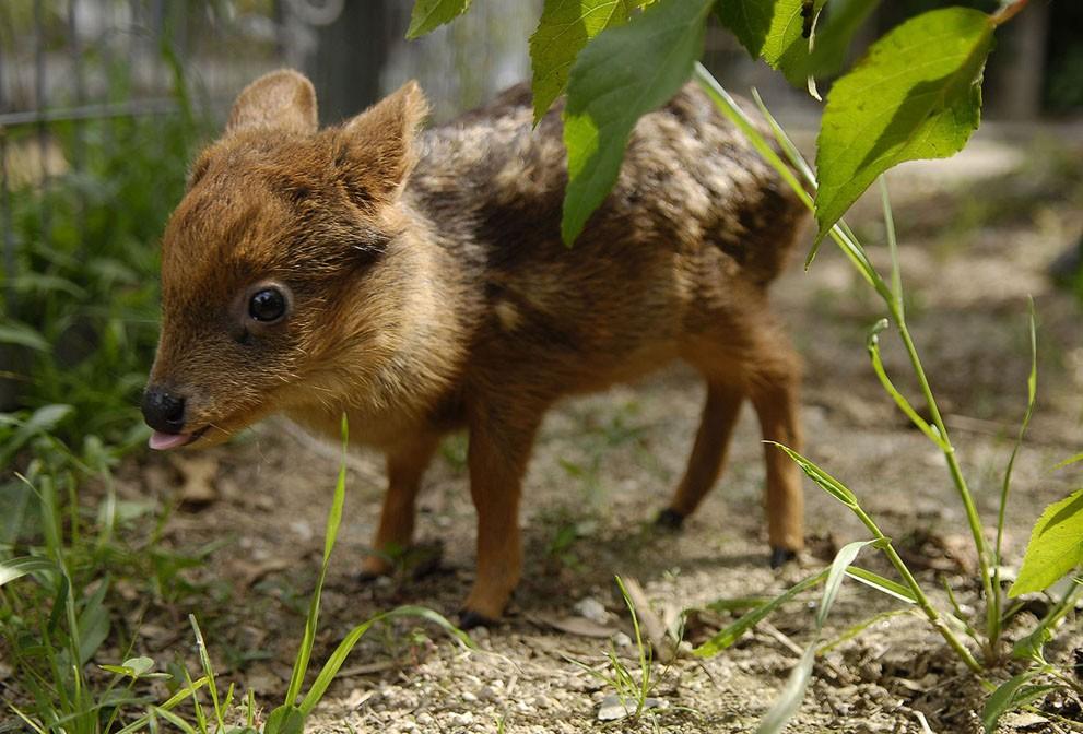 animalnews05 Животные в новостях