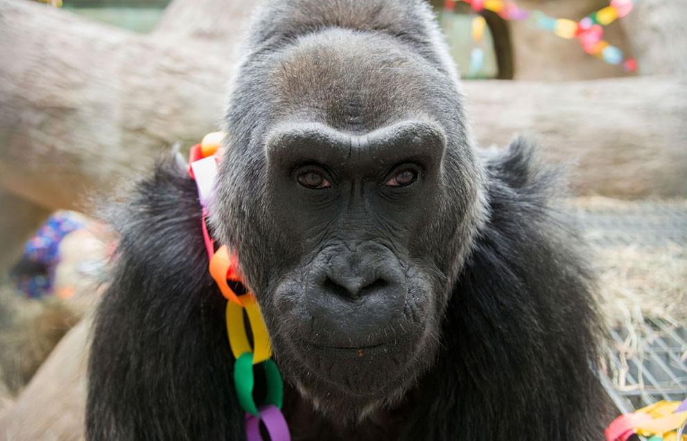 animalnews06 Животные в новостях