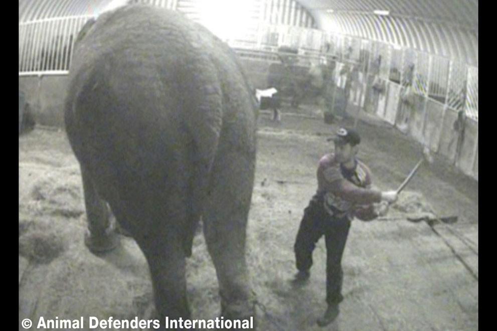 animalnews08 Животные в новостях