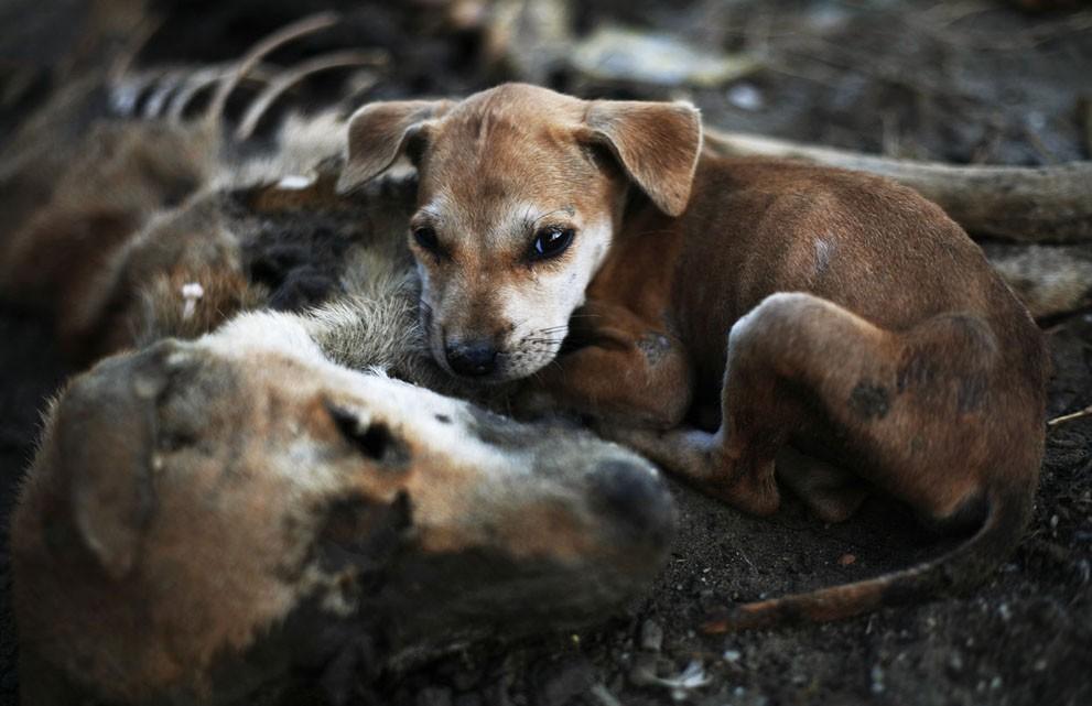 animalnews11 Животные в новостях