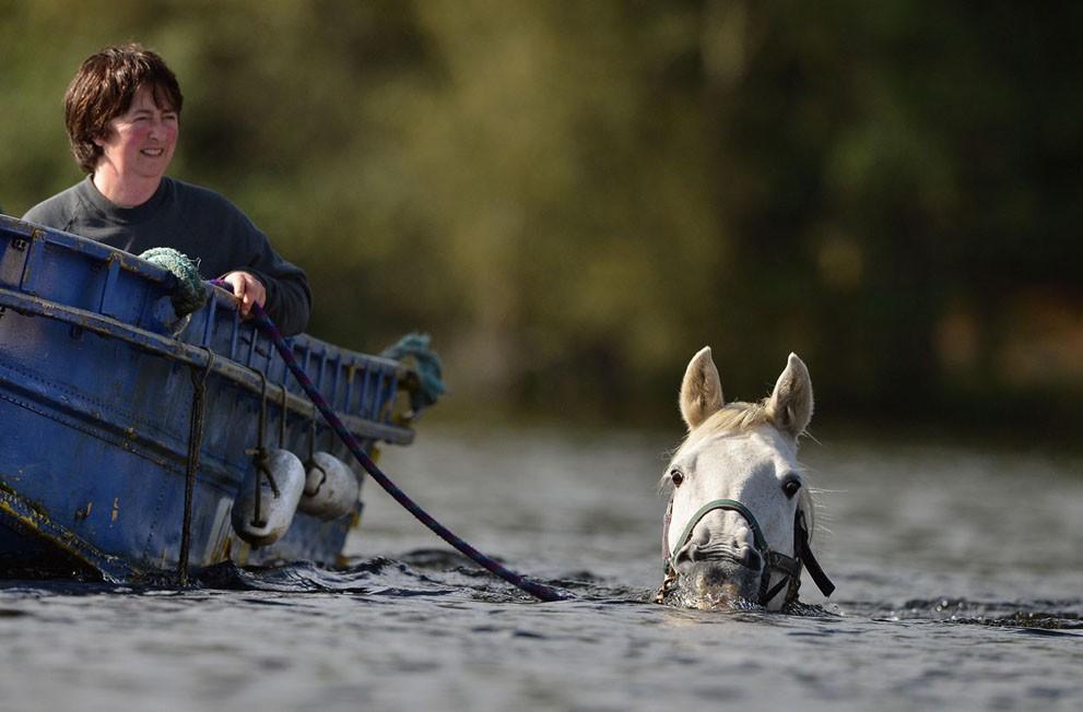 animalnews13 Животные в новостях