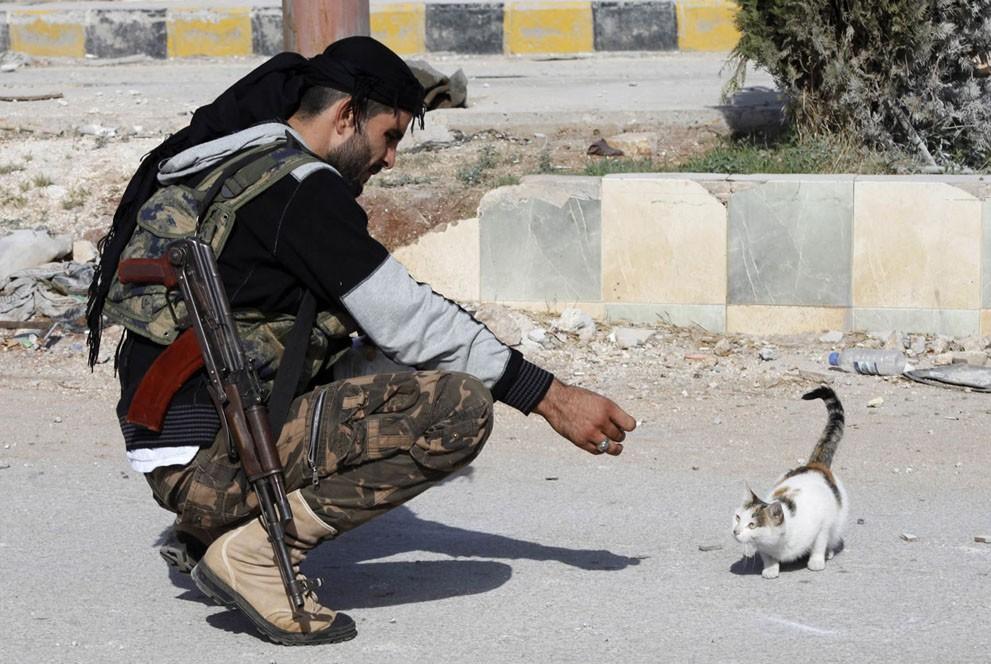 animalnews19 Животные в новостях