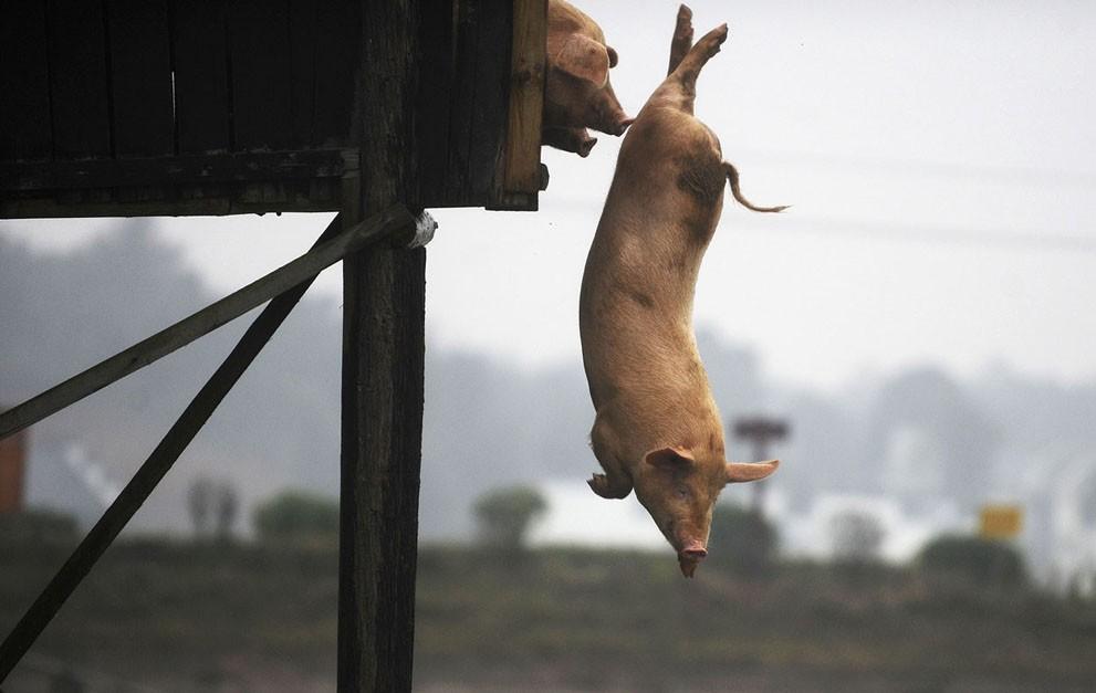 animalnews21 Животные в новостях