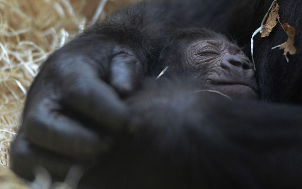 animalnews22 Животные в новостях