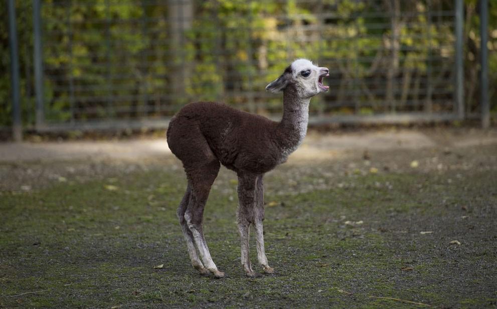 animalnews23 Животные в новостях