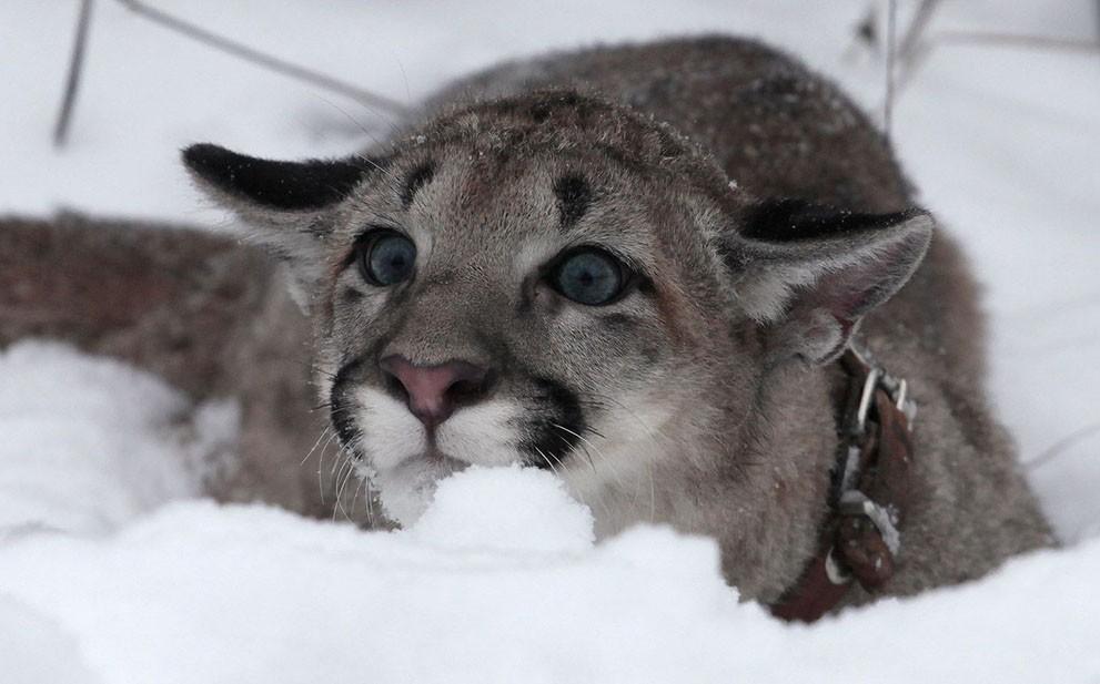 animalnews24 Животные в новостях