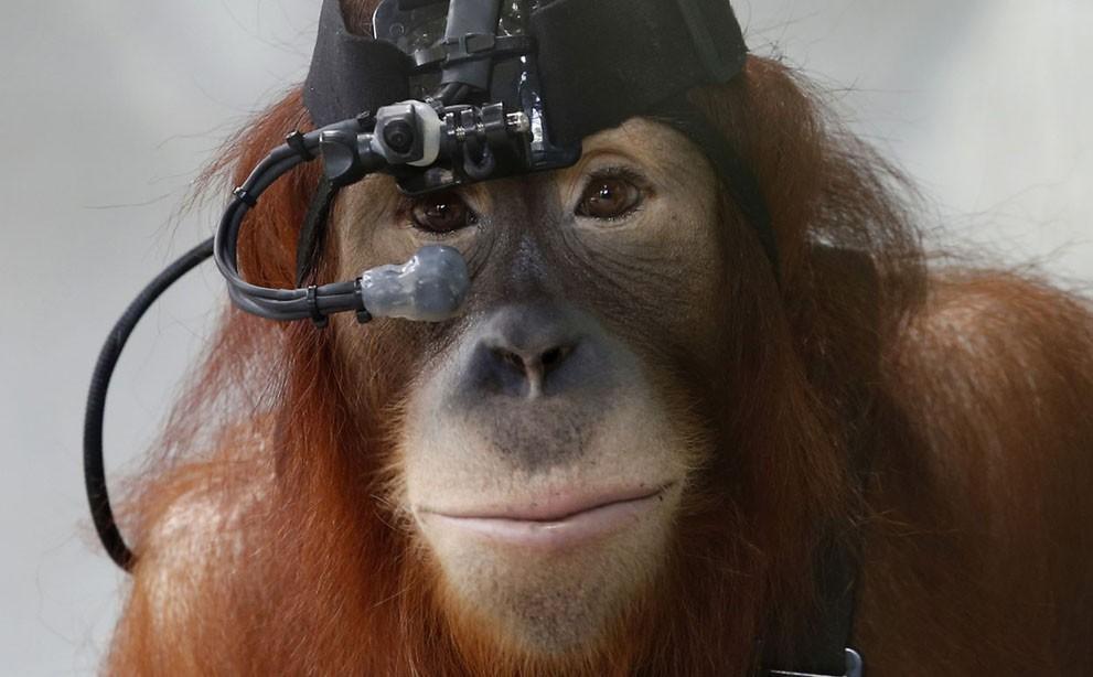 animalnews26 Животные в новостях