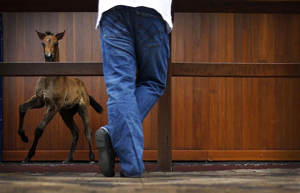 animalnews27 Животные в новостях