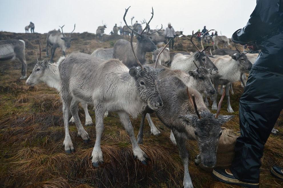 animalnews29 Животные в новостях