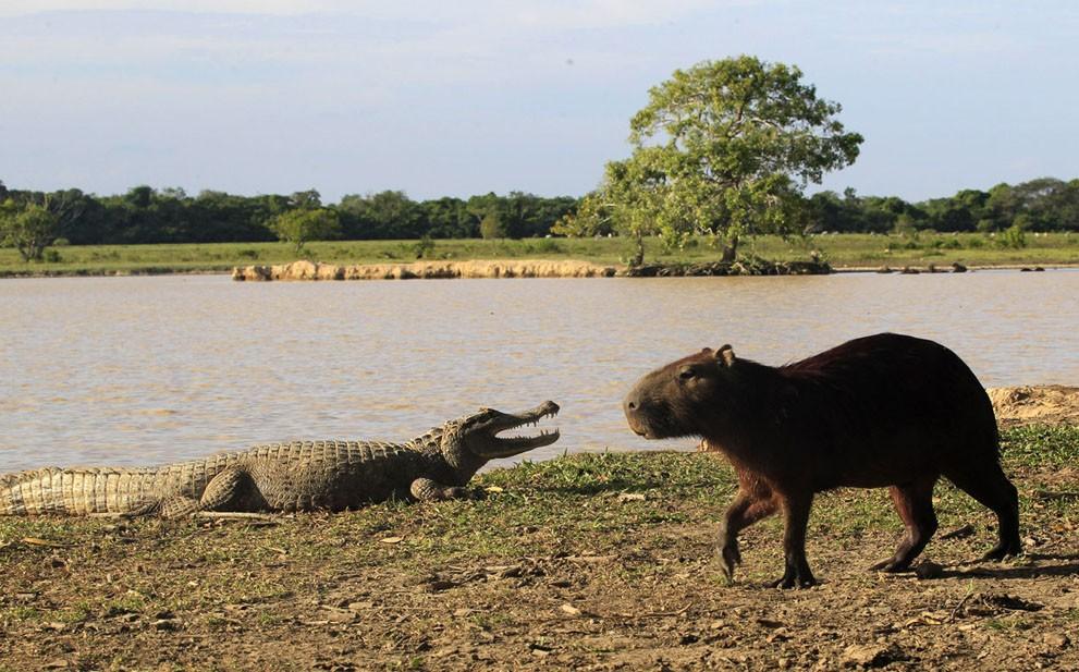 animalnews31 Животные в новостях