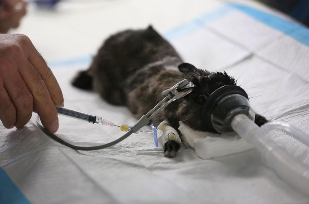 animalnews34 Животные в новостях