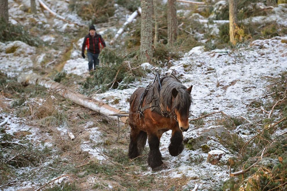 animalnews35 Животные в новостях