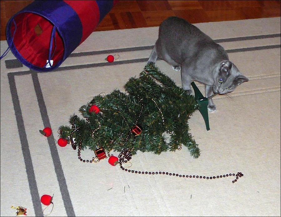 cat11 А вы поставили елку для кота?