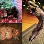 А вы поставили елку для кота?