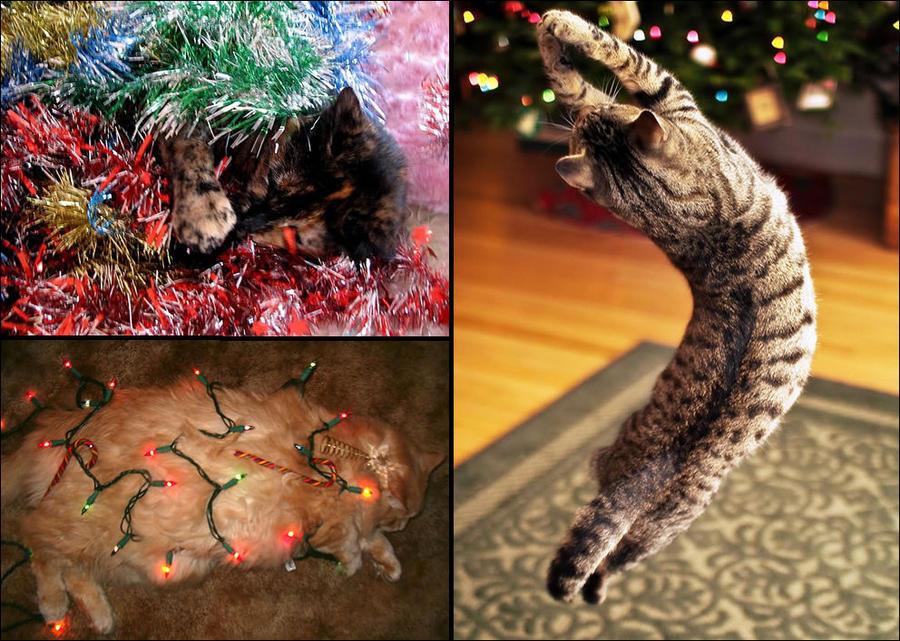 cat12 А вы поставили елку для кота?