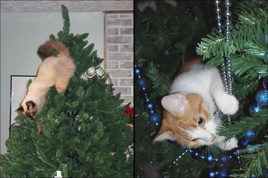 cat13 А вы поставили елку для кота?