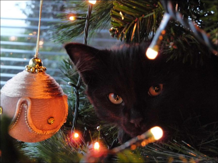 cat14 А вы поставили елку для кота?