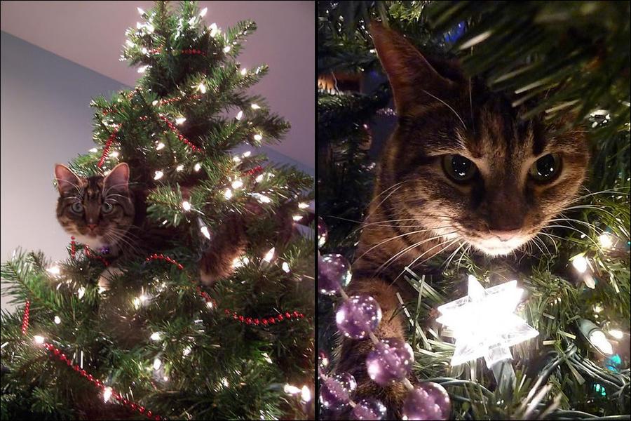 cat15 А вы поставили елку для кота?
