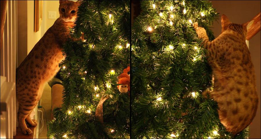 cat16 А вы поставили елку для кота?