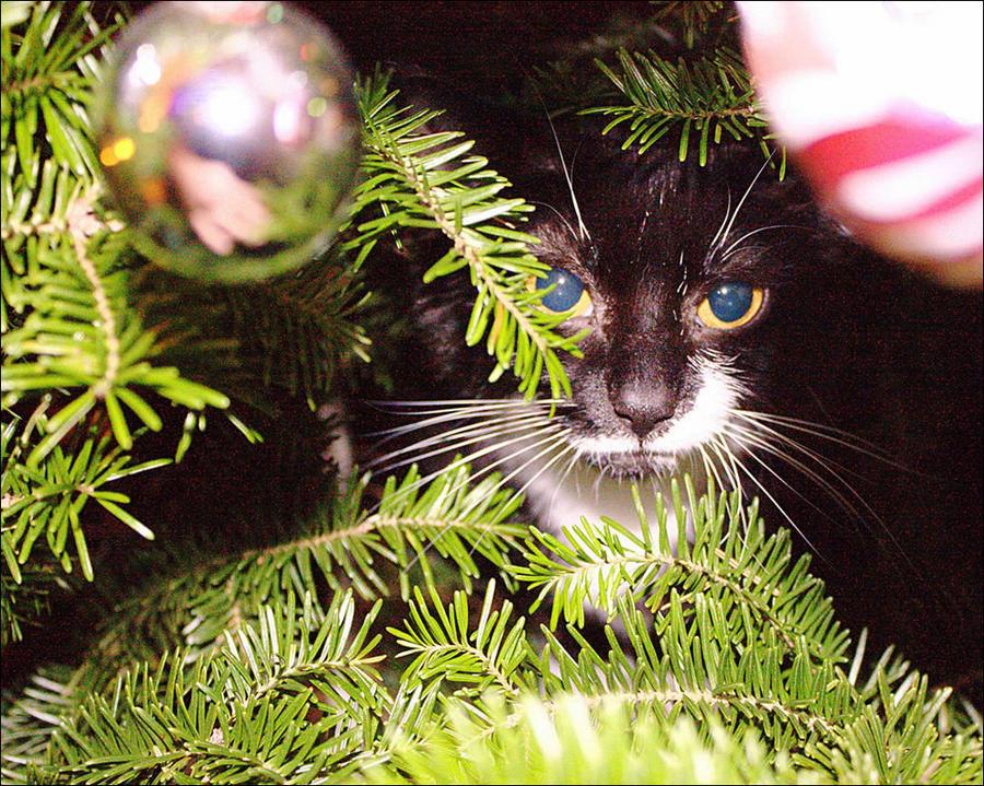 cat17 А вы поставили елку для кота?