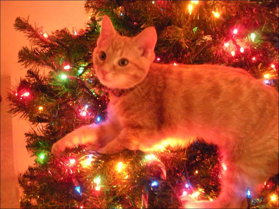 cat19 А вы поставили елку для кота?