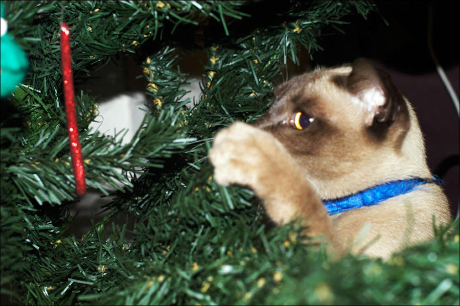 cat2 А вы поставили елку для кота?