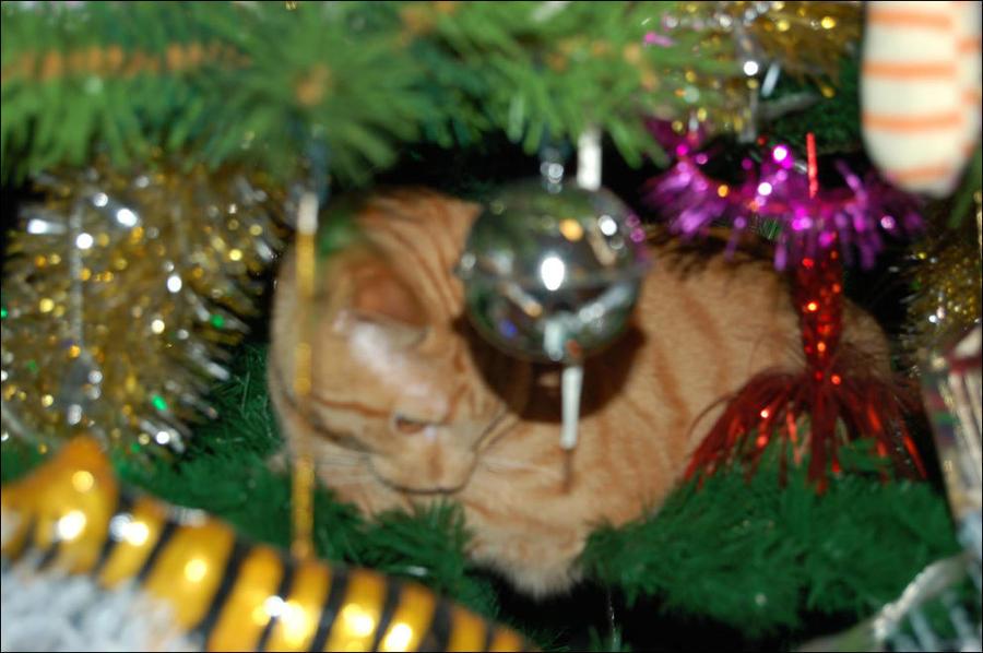 cat21 А вы поставили елку для кота?