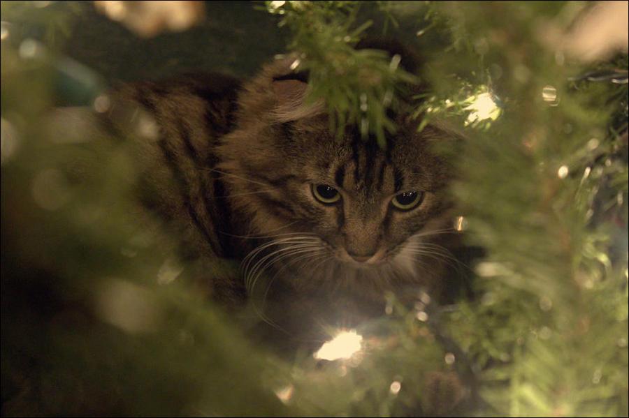 cat23 А вы поставили елку для кота?