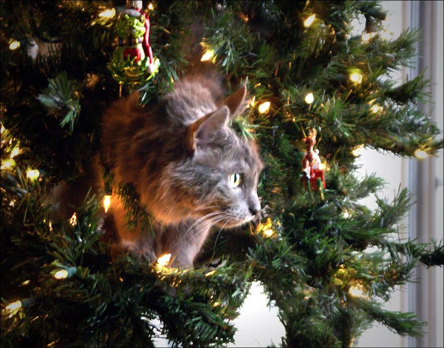 cat24 А вы поставили елку для кота?