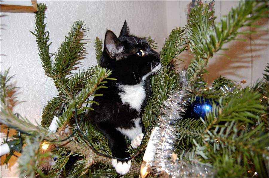 cat25 А вы поставили елку для кота?