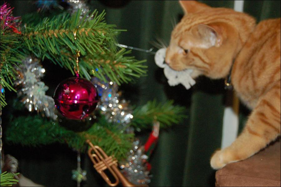 cat26 А вы поставили елку для кота?