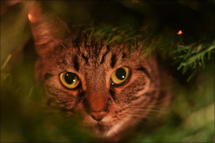 cat27 А вы поставили елку для кота?