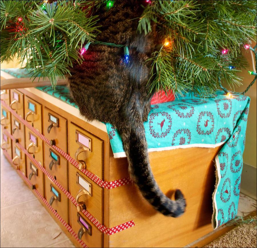 cat28 А вы поставили елку для кота?