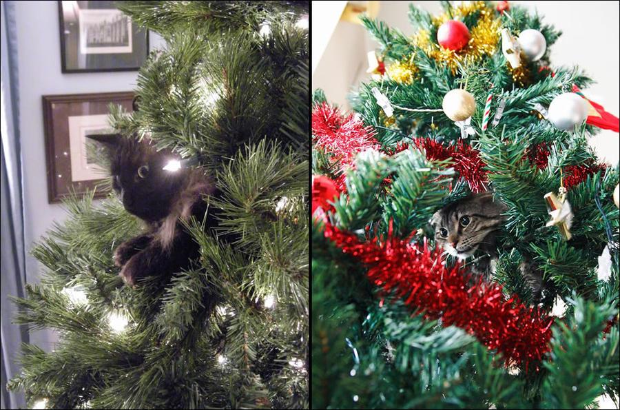 cat29 А вы поставили елку для кота?