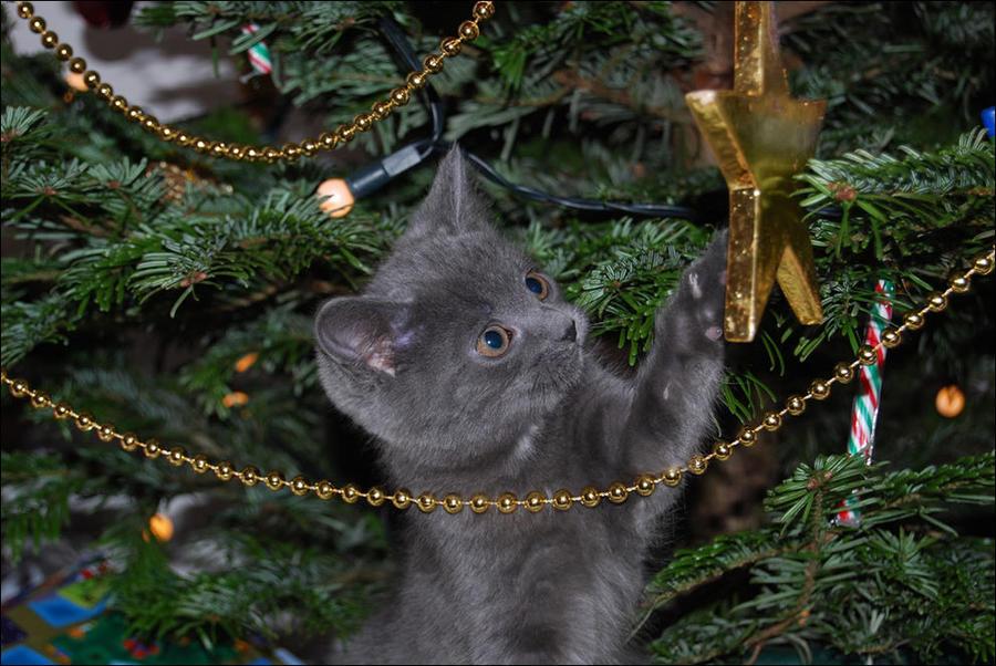 cat3 А вы поставили елку для кота?