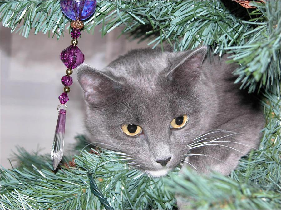 cat30 А вы поставили елку для кота?