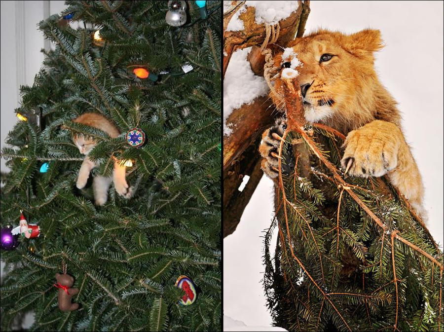 cat32 А вы поставили елку для кота?