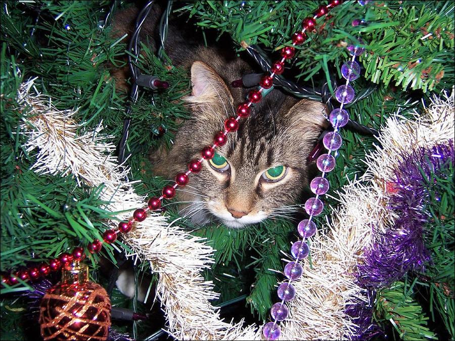 cat34 А вы поставили елку для кота?