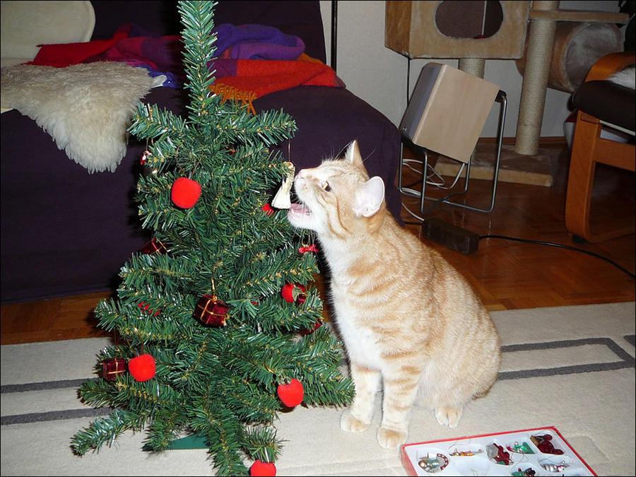 cat35 А вы поставили елку для кота?