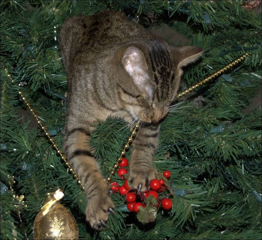 cat36 А вы поставили елку для кота?